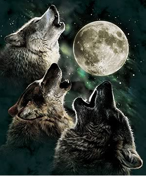 howling-at-the-moon-kitsunes-and-wolves-30847061-300-361