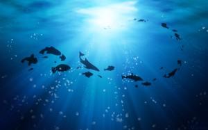 life_under_the_ocean-wide