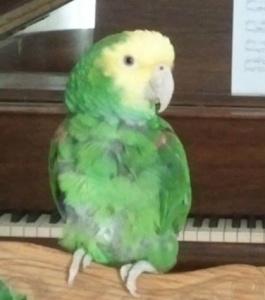 Anna on Piano