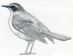 how-to-draw-a-bird06