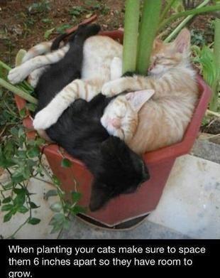 Planting Cats